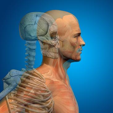 Parietale Osteopathie - Christian Stampfer | Shiatsu und Osteopathie ...