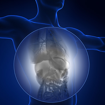 Viszerale Osteopathie - Christian Stampfer | Shiatsu und Osteopathie ...